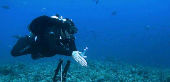 5 éves a Cápák a keresőmben című film – Nézd meg Itt!