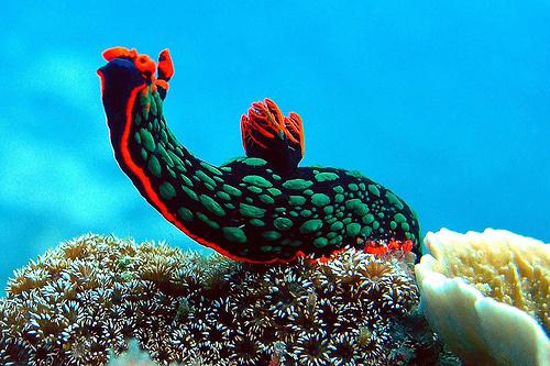 tengeri csiga3