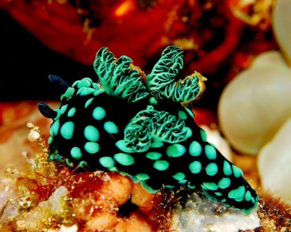 tengeri csiga6