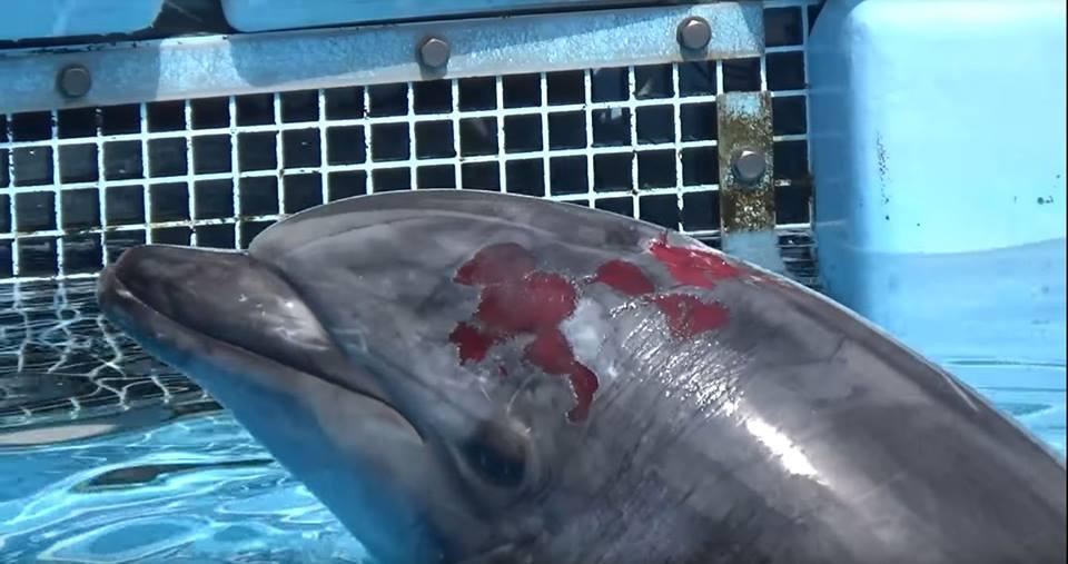 delfin, delfinárium, delfin simogatas, delfin úszás, búvár